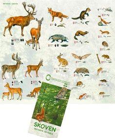 Skoven - Pattedyr og fugle
