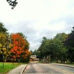 Morning #babson! #nofilter #autumnleaves #foliage   Instagram