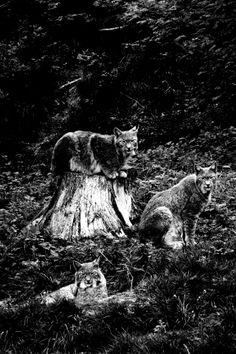 photoshamanism:  Observe the observer by Katharina Rhein for Mascha