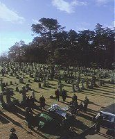 Harold and Maude 1971.  Cemetery scene filmed at Holy Cross Cemetery in Colma CA.