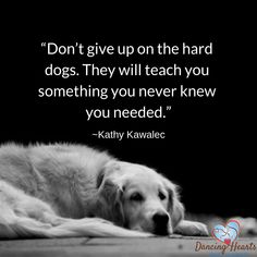 Puppy Quotes, Dog Lover Quotes, Dog Quotes Love, Animal Quotes, Dog Lovers, Save Animals Quotes, Quotes About Dogs, Dog Best Friend Quotes, Pet Quotes