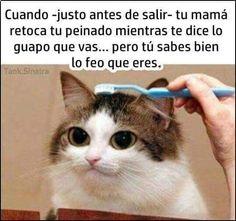 Sip!! #memes #chistes #chistesmalos #imagenesgraciosas #humor www.megamemeces.c...