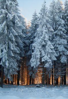 Light in winter forest by ioana forna (no location given)