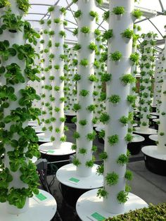 Behold the Tower Gardens! Amazing way to utilize science in our food production