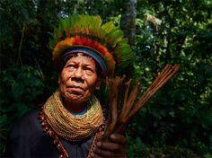 Indígenas da Amazónia escrevem primeira enciclopédia de medicina tradicional…