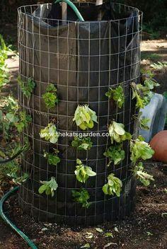 Verticle lettuce garden