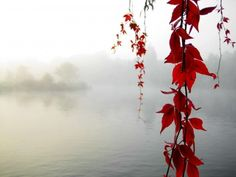 maple, leaf, branch, fog, lake, nature