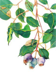 A4 print: Gum tree branch - botanical print of Australian native eucalyptus with gumnuts - purple & green home decor - nature art print