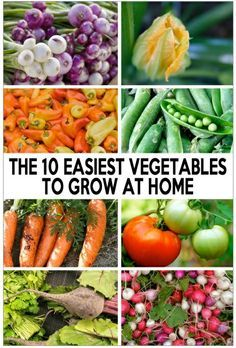 Check out the 10 Easiest Vegetables to Grow at Home! http://ecosalon.com/easy-gardening/