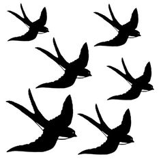 Swallows, Wall Allure