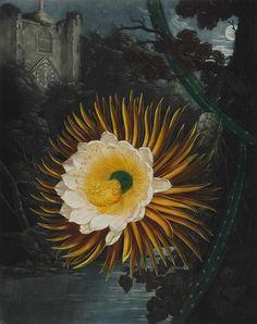 「芸術植物園」が愛知県美術館で開催 - 古代から現代までの植物表現を展示の写真2
