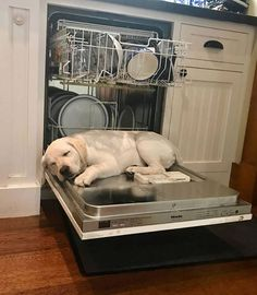Mind Blowing Facts About Labrador Retrievers And Ideas. Amazing Facts About Labrador Retrievers And Ideas. Lab Puppies, Cute Puppies, Cute Dogs, Cute Baby Animals, Funny Animals, Dog Pictures, Funny Pictures, Dog Photos, Hilarious Photos