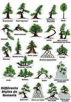 Différents styles de bonsais