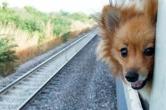 """A victory for American pet owners and for Amtrak"" Written by  William C. Vantuono, Editor-in-Chief I Railway Age"