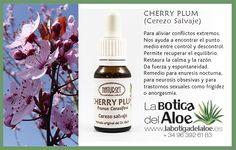 Cherry Plum - Flores de Bach