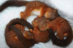 It's hard work being so squee!  Sleep tight little squirrels!