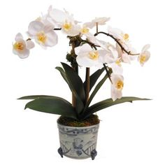"""Check out this item at One Kings Lane! 14"""" Phalaenopsis in Pot, White"""
