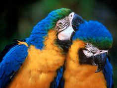 Parrot PDA is far cuter than human PDA