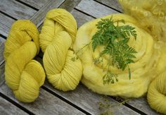 yarn and roving dyed with cow parsley