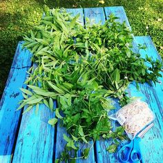 Harvesting peppermint and lemon verbena. Make And Sell, How To Make, Verbena, Apothecary, Preserves, Aromatherapy, Peppermint, Harvest, Lemon