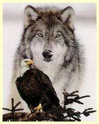 wilk orzeł