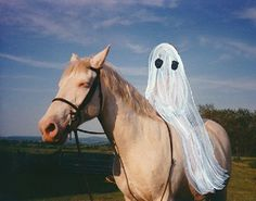 Funny Ghost, Cute Ghost, Sheet Ghost, Horse Costumes, Ghost Pictures, Ghost Stories, Magazine Art, Cool Art, Art Drawings
