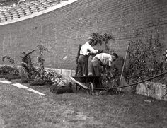Planting the ivy at Wrigley, 1937. (Before my time but interesting to see the wall!)