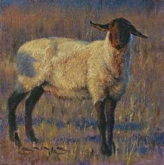Sheep's Shadow by William Suys Oil ~ 6 x 6 - Sheep painting