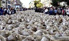 Where wool is, is also a way #madrid https://plus.google.com/+AurorasaTarot/posts/2gJpHEjHw1i