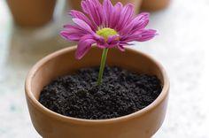 Blog da Roberta Giovaneli: vaso de flor com bolo e sorvete