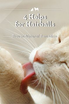 Hairballs - if you've ever lived with a cat chances are that at one time or another you've come across (or even stepped on) one of these gooey, tubular masses of grossness. Thankfully, there are simple, natural remedies that can make the experience of hairballs a thing of the past.