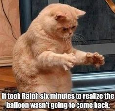 funny cat meme of an orange tabby cat with his paws outstratched and the caption it took Ralph six minutes to realize the balloon wasn't goi...