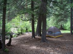 western national forest camping
