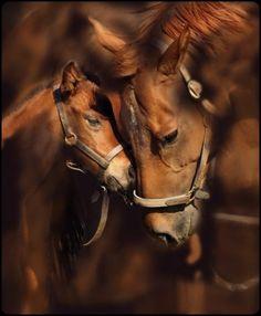 Een mama en een baby paard