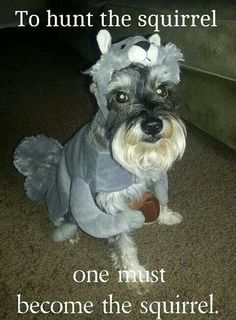 schnauzer quote funny - Google Search
