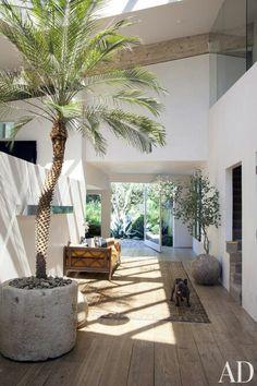 Ruimte, palmboom, openheid