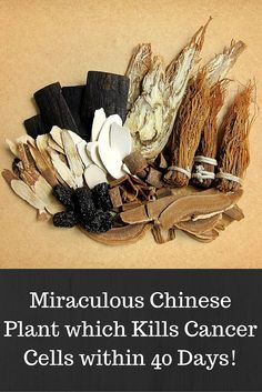 Miraculous Chinese Plant which Kills Cancer Cells within 40 Days!  Read more at:  http://www.alltraditionalherbs.com/miraculous-chinese-plant-which-kills-cancer-cells-within-40-days/