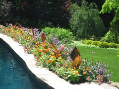 Pool Garden  www.pocketfullofposiesdesign.com