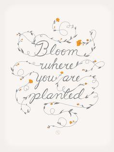 Florece allí donde estés plantado.