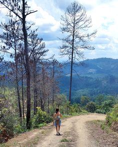 La Ruta del Café | Coffee Route.  Visit the Coffee bean filled mountains of Olancho, Honduras.