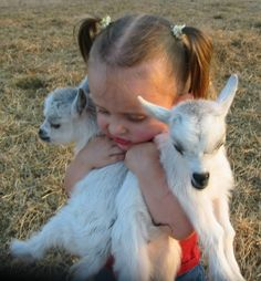 OMG! I have to have one of these pygmy goats. Too stinkin cute!