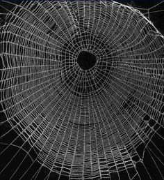 spider webs - Google Search