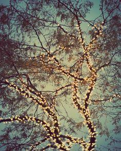 eye poetry - the photo blog of fine art photographer Irene Suchocki: Twinkle twinkle
