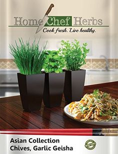 Chinese Garlic Chive Seeds Geisha Asian Collection Non GMO Herb Seeds Designed For Home Cooks With Limited Gardening Experience Conveniently Grow Chives Indoors Garlic Onion Chives * Details can be found by clicking on the image.