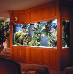 I have always said that i would love a saltwater aquarium in my home! (with someone else to clean it)