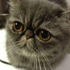 сердитые коты - Поиск в Google