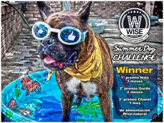 Concurso summer dog challenge - the winners are...