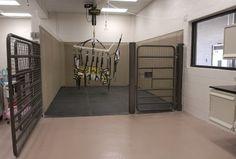 Equine intensive care unit neurological and trauma stall Louisiana Vet School