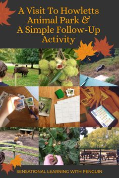 A Visit To Howletts Animal Park & A Simple Follow-Up Activity – Sensational Learning with Penguin Hands On Learning, Learning Activities, Cards On The Table, Wild Animal Park, Special Educational Needs, Wild Dogs, Ready To Play, Some Cards, Picture Cards