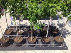 Draadrek voor stabiel presenteren van planten en bomen: V-feetRack. Wire-rack for a stable presentation for plants and trees: V-feetRack.